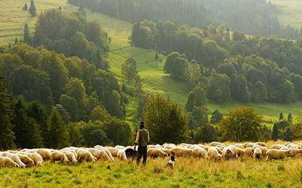Gebze Çiftlik Elemanı İş İlanı