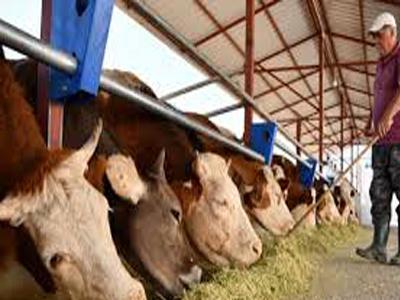 Çiftlik Elemanı İş İlanı